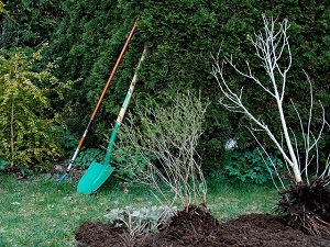 spade and fork in garden