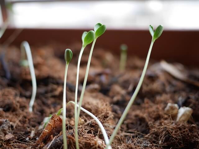 sprouts inside soil